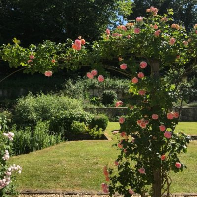 Rose pruning example by Bath Garden Design