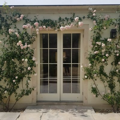 Trained Roses example by Bath Garden Design