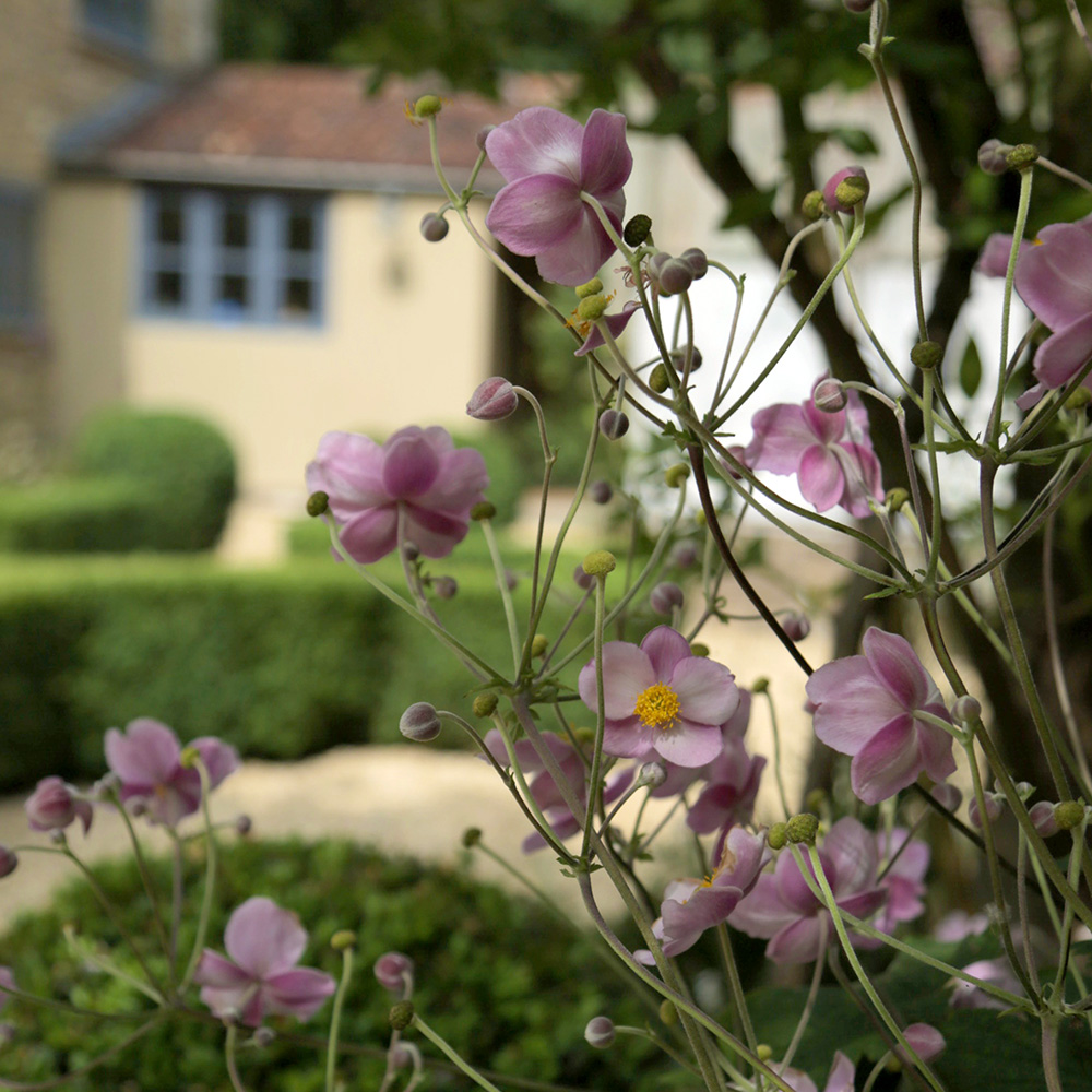 Find out about Bath Garden Designs advice and consultation service