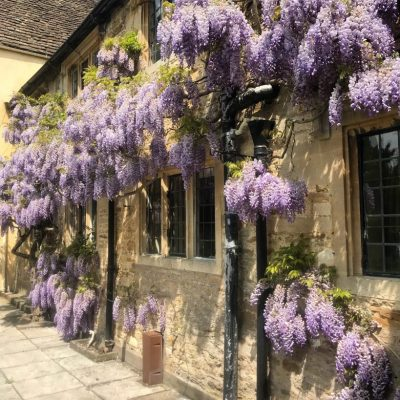 Wisteria pruning example by Bath Garden Design