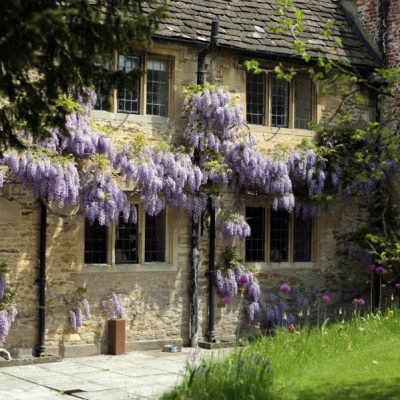 Wisteria pruned by our specialist gardener
