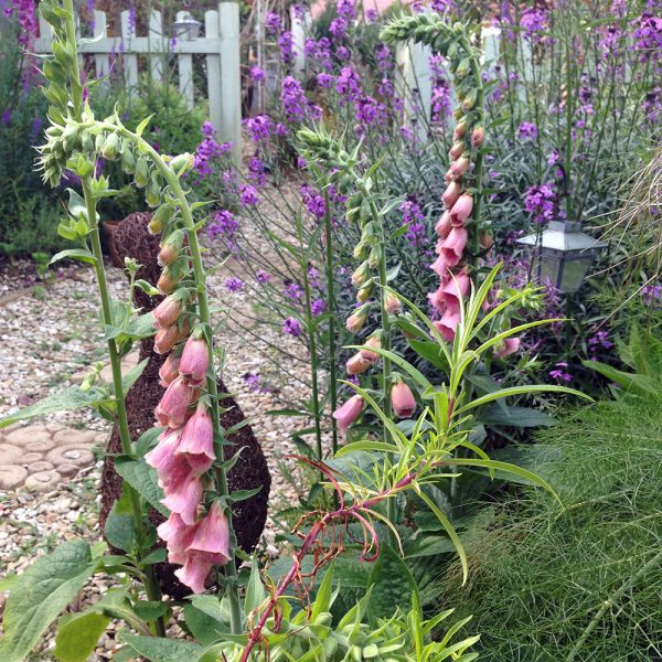 Bath Garden Designs planting service