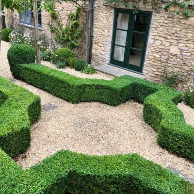 Box hedge topiary by Bath Garden Design