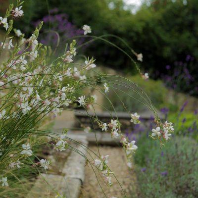 Pretty summer perennial planting by Bath Garden Design