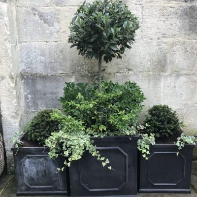 Traditional lead planters with topiary and foliage planting