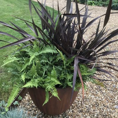 Ferns and Phormium for low maintenance planters