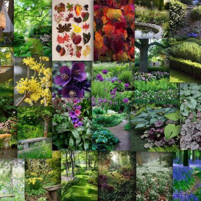 Mood board exploring woodland planting styles